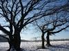 2009-01-Schnee_07.jpg